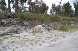 banksia-park-puppies-bluberri-10-of-14