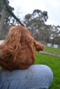 Banksia Park Puppies Salli - 6 of 22