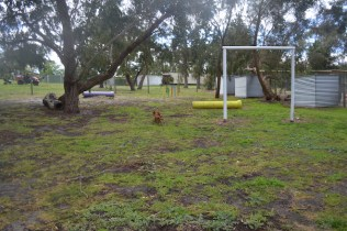 banksia-park-puppies-shayla-22-of-41
