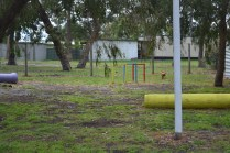 banksia-park-puppies-shayla-8-of-41