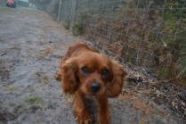 banksia-park-puppies-shiela-13-of-13
