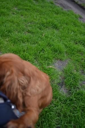Banksia Park Puppies Silli - 8 of 10