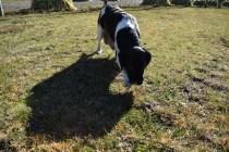 Ludo-Cavador-Banksia Park Puppies - 18 of 41