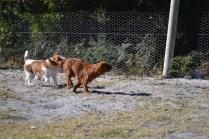 Sheila- Banksia Park Puppies - 11 of 32