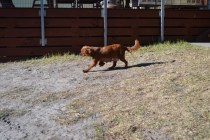 Sheila- Banksia Park Puppies - 2 of 32
