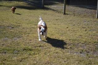 Sheila- Banksia Park Puppies - 8 of 32