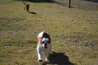 Sheila- Banksia Park Puppies - 9 of 32