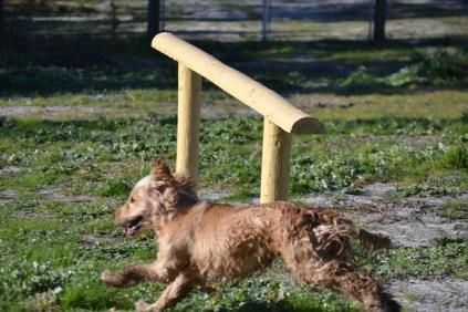 Banksia Park Puppies Jacinta - 48 of 49