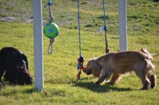 Banksia Park Puppies Jazz - 11 of 41