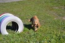 Banksia Park Puppies Jazz - 24 of 41
