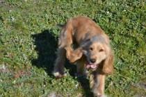 Banksia Park Puppies Jazz - 26 of 41