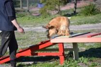 Banksia Park Puppies Jazz - 28 of 41