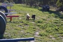 Banksia Park Puppies Jazz - 3 of 41