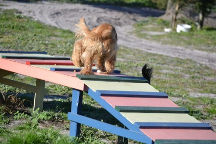 Banksia Park Puppies Jazz - 31 of 41