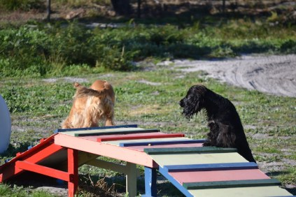Banksia Park Puppies Jazz - 34 of 41