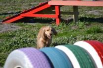 Banksia Park Puppies Jazz - 39 of 41