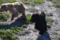 Banksia Park Puppies Jazz - 7 of 41