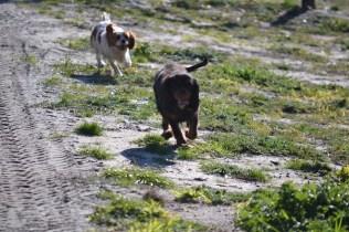 Banksia Park Puppies Ponky - 11 of 36