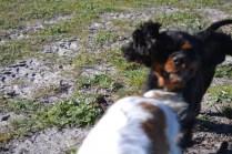 Banksia Park Puppies Ponky - 25 of 36