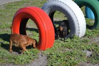 Banksia Park Puppies Ponky - 34 of 36