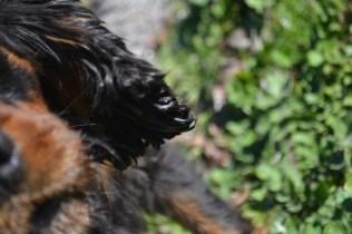 Banksia Park Puppies Ponky - 35 of 36