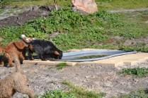 Banksia Park Puppies Ponky - 8 of 36