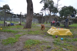 banksia-park-puppies-hannah-5-of-28