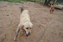 banksia-park-puppies-holky-7-of-8