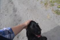banksia-park-puppies-josefa-19-of-23
