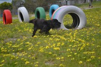 banksia-park-puppies-josefa-6-of-23