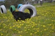 banksia-park-puppies-josefa-7-of-23