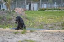 banksia-park-puppies-julia-6-of-14