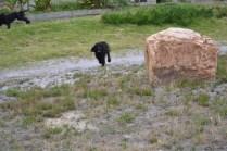banksia-park-puppies-julia-josepha-19-of-39