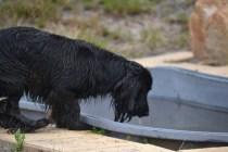 banksia-park-puppies-julia-josepha-33-of-39
