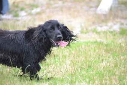 banksia-park-puppies-julia-josepha-36-of-39