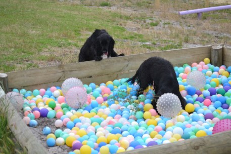 banksia-park-puppies-julia-josepha-8-of-39