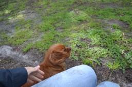 banksia-park-puppies-julsi-15-of-35