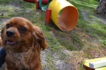 banksia-park-puppies-julsi-2-of-35