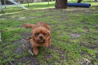 banksia-park-puppies-julsi-22-of-35