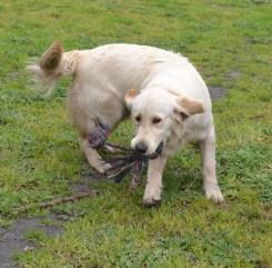 banksia-park-puppies-ocean-7-of-21