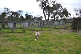 banksia-park-puppies-oko-21-of-29