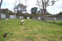 banksia-park-puppies-onnie-23-of-27