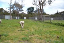 banksia-park-puppies-onnie-24-of-27
