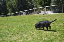 banksia-park-puppies-panky-1-of-25