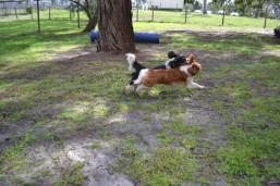 banksia-park-puppies-patricia-11-of-39