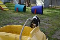 banksia-park-puppies-patricia-35-of-39