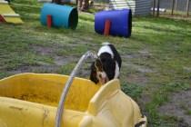 banksia-park-puppies-patricia-36-of-39