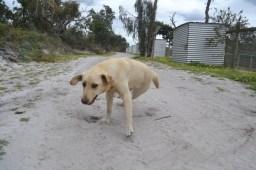 banksia-park-puppies-raspberri-3-of-11