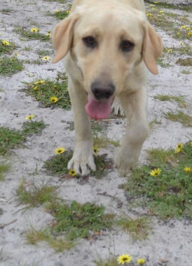 banksia-park-puppies-raspberri-4-of-11