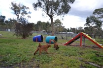 banksia-park-puppies-bunny-9-of-19